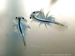 Корм мотыль для аквариумных рыб