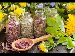 Лекарственное растительное сырье