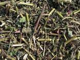 Лекарственные Травы и плоды - photo 4