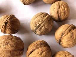 Орех с черупке