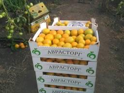 Овощи и фрукты оптом