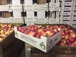 Овощи и фрукты оптом - фото 3