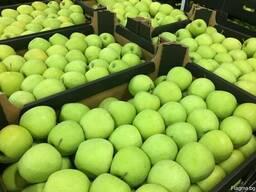 Polish apples, La-Sad - photo 6