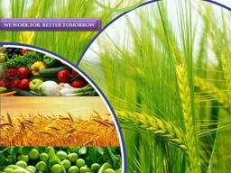 Производител и доставчик на пестициды по целия свят
