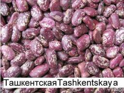Quality 3D beans from Kyrgyzstan - photo 1