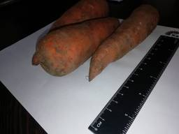Ще продавам моркови на едро Казахстан