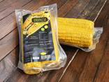 Вакуумно приготвена царевица върху кочана - photo 1