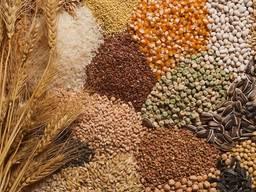 Зерно и зерновые